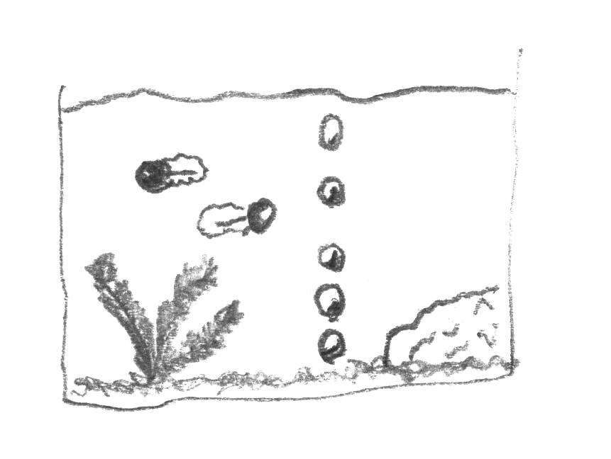 Thumbnail of Aquarium