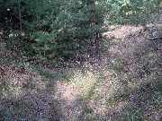 Thumbnail of Blick in den Wald