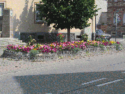 Thumbnail of Blumen in Viernheim